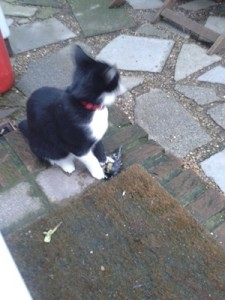 Clive Scott The Black Cat